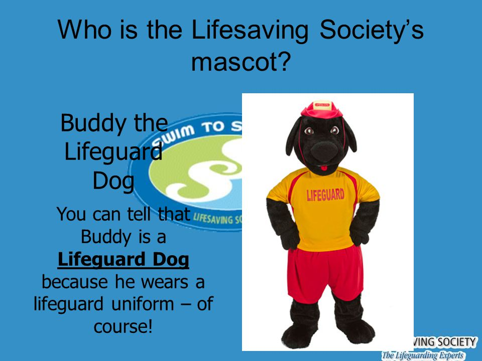 Who is the Lifesaving Society's mascot? Buddy the Lifeguard Dog You can tell that Buddy is a Lifeguard Dog because he wears a lifeguard uniform – of c