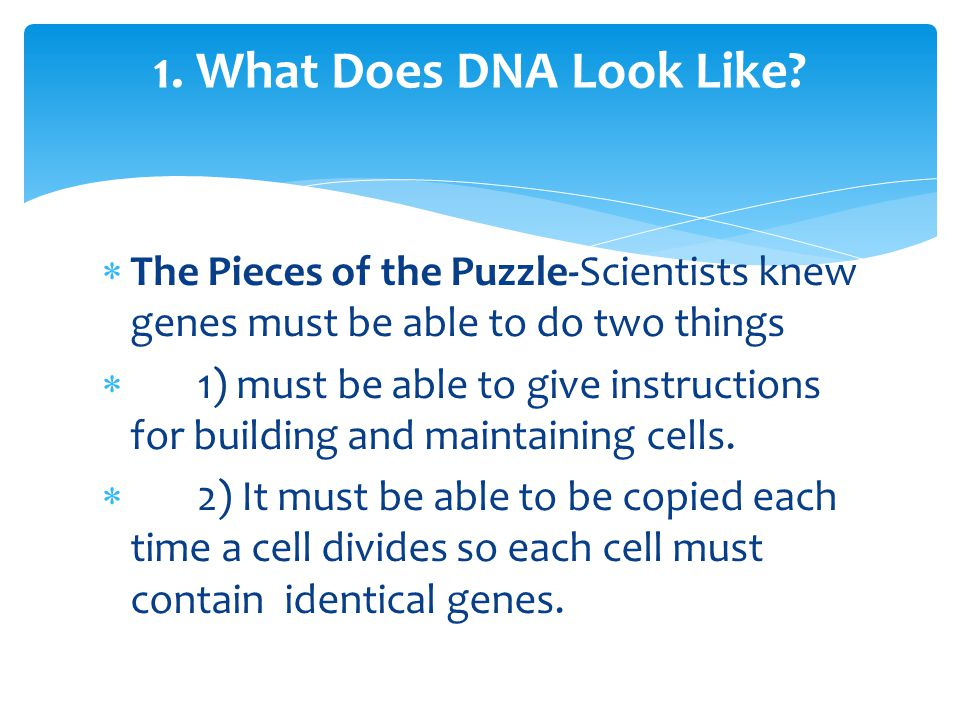 1.What Does DNA Look Like.
