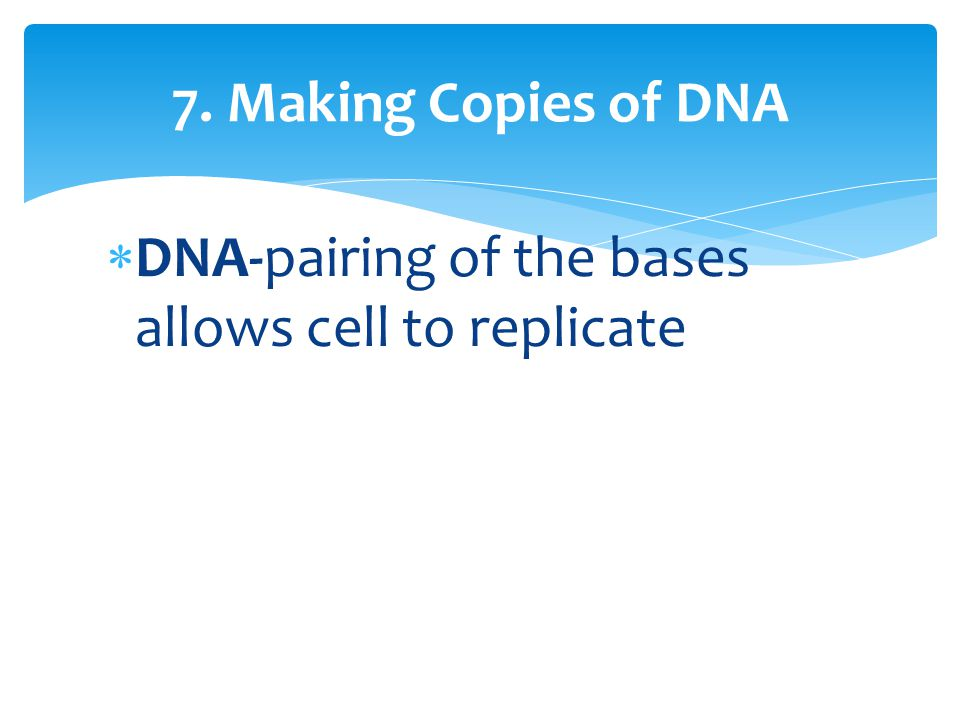  DNA-pairing of the bases allows cell to replicate 7. Making Copies of DNA