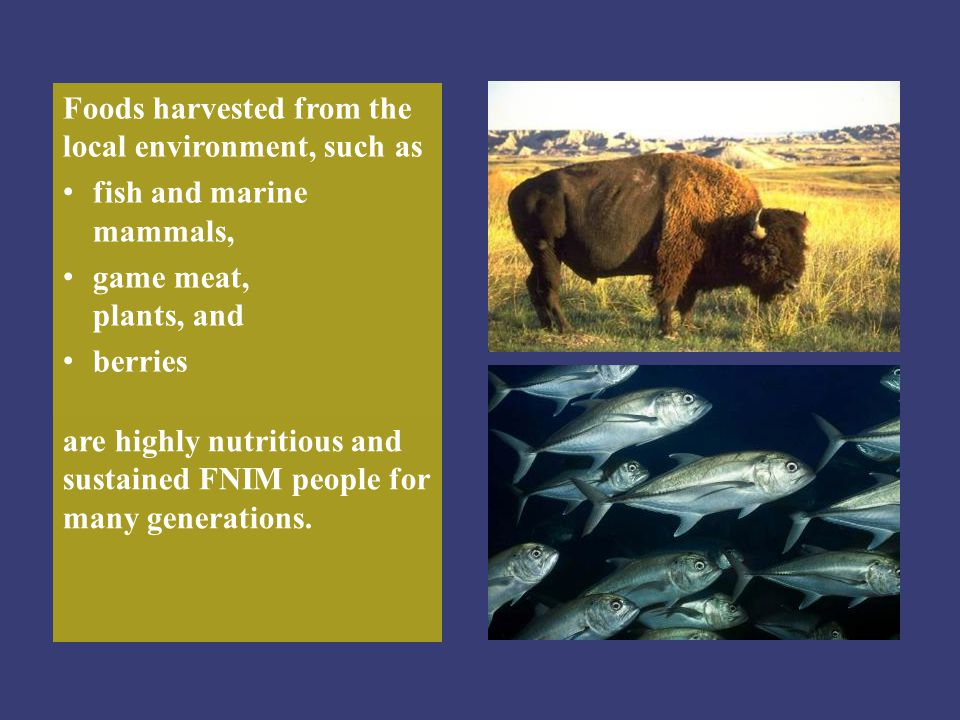 Foods harvested from the local environment, such as fish and marine mammals, game meat, plants, and berries are highly nutritious and sustained FNIM p