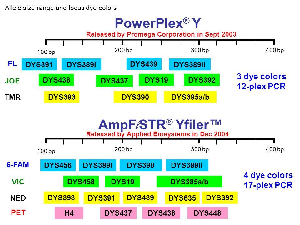 Allele size range and locus dye colors 100 bp 400 bp300 bp200 bp DYS391 PowerPlex ® Y DYS389I DYS439 DYS389II DYS438 DYS437 DYS19DYS392 DYS393DYS390DY