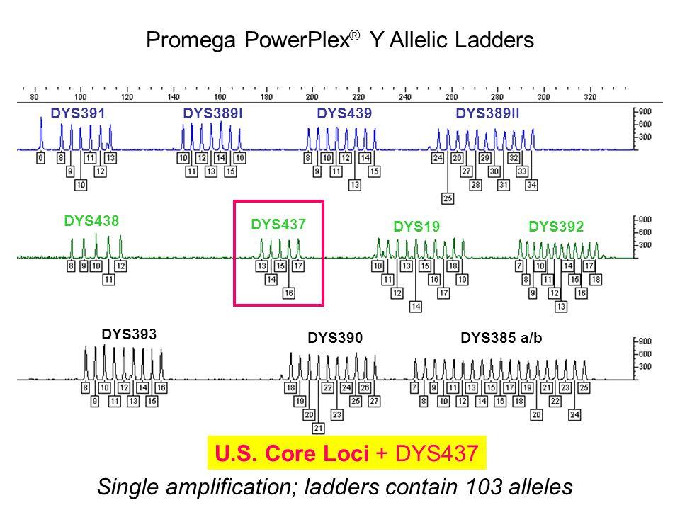 DYS391DYS389IDYS439DYS389II DYS438 DYS437 DYS19DYS392 DYS393 DYS390DYS385 a/b Single amplification; ladders contain 103 alleles Promega PowerPlex ® Y