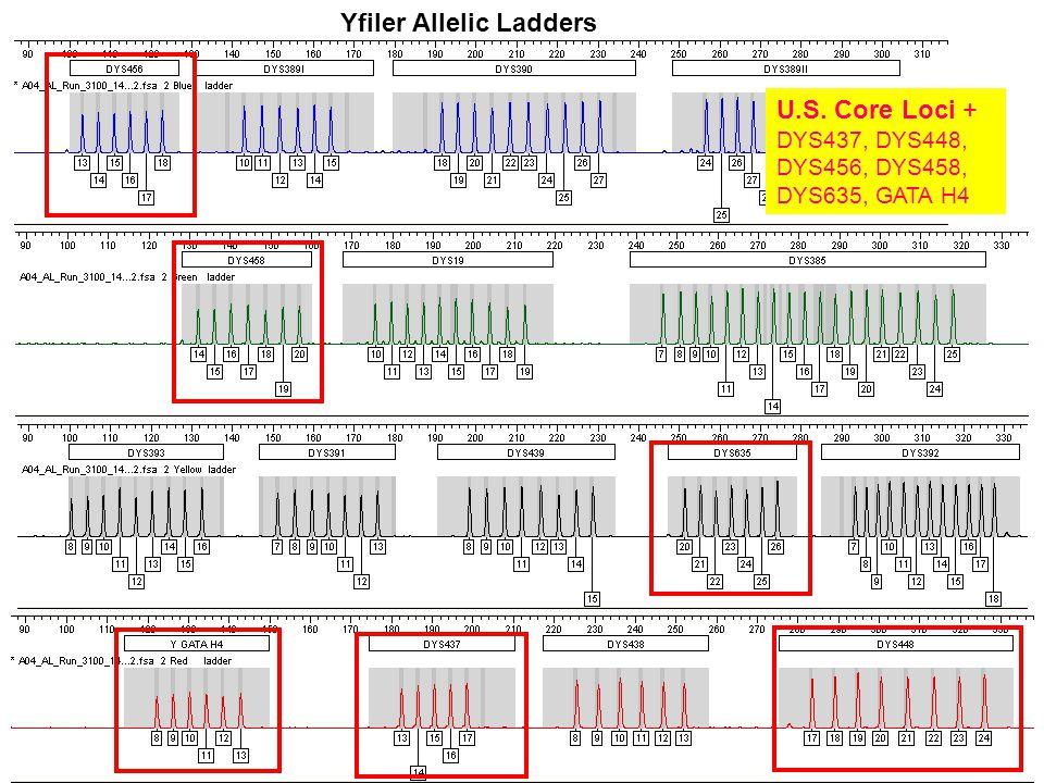 Yfiler Allelic Ladders U.S. Core Loci + DYS437, DYS448, DYS456, DYS458, DYS635, GATA H4