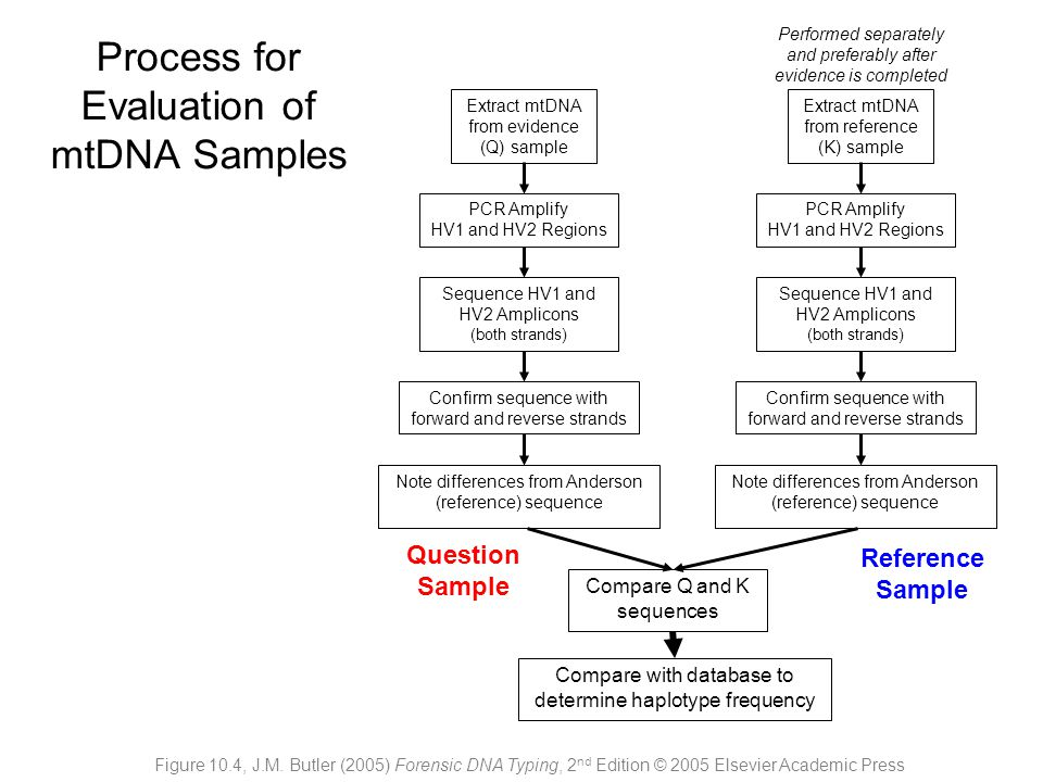 Extract mtDNA from evidence (Q) sample PCR Amplify HV1 and HV2 Regions Sequence HV1 and HV2 Amplicons (both strands) Confirm sequence with forward and