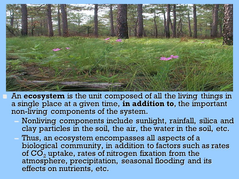 n An ecosystem is the unit composed of all the living things in a single place at a given time, in addition to, the important non-living components of