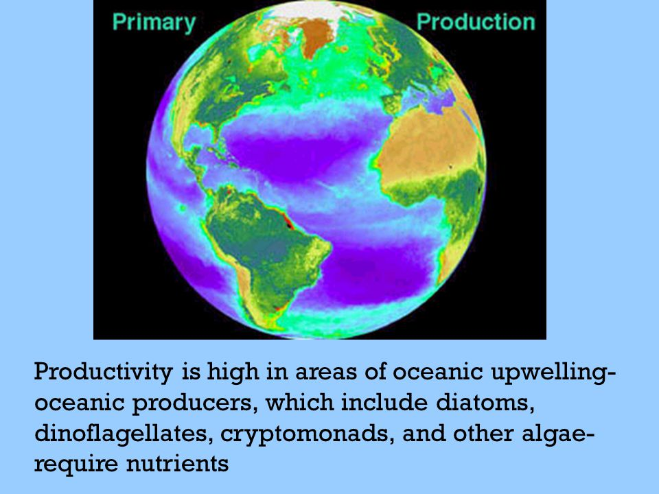 Productivity is high in areas of oceanic upwelling- oceanic producers, which include diatoms, dinoflagellates, cryptomonads, and other algae- require