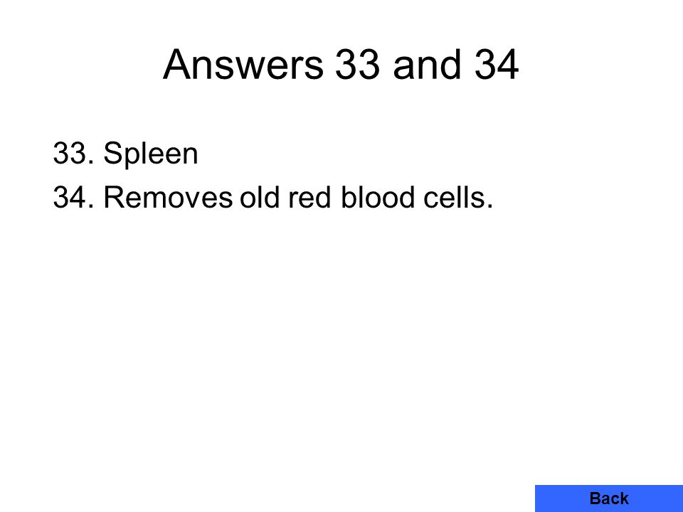 Answers 33 and 34 Back 33. Spleen 34. Removes old red blood cells.