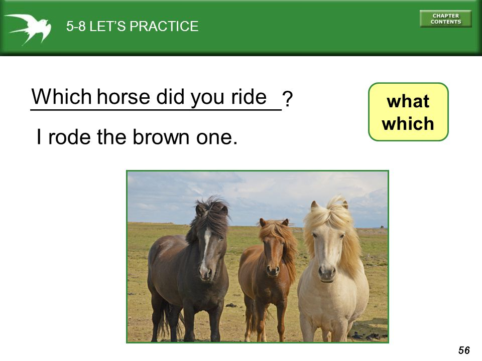 56 5-8 LET'S PRACTICE what which _____________________? I rode the brown one. Which horse did you ride