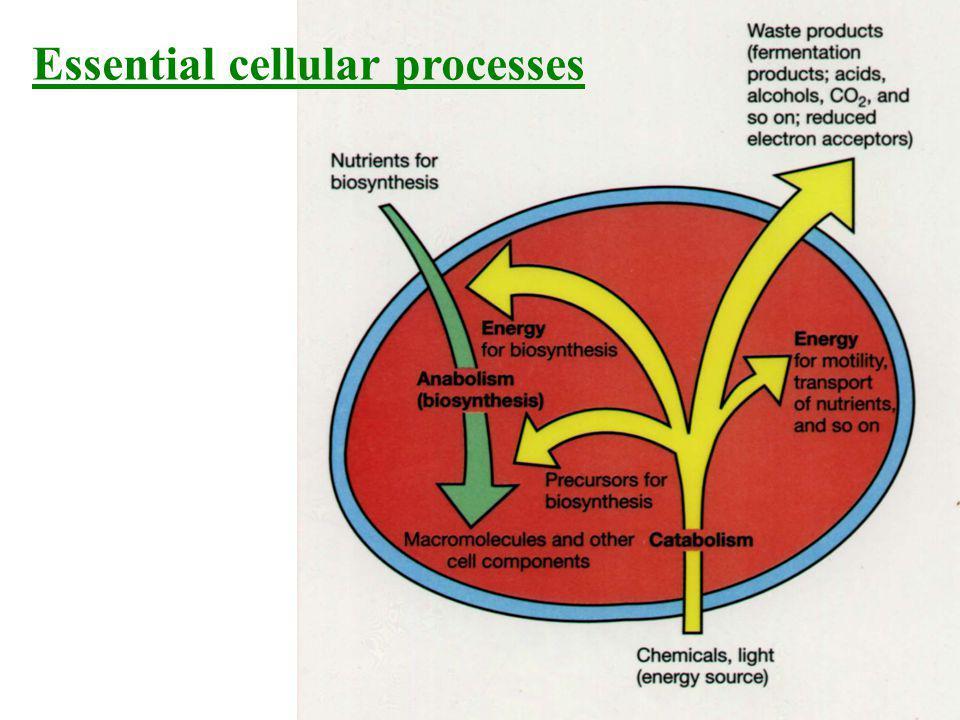 Essential cellular processes
