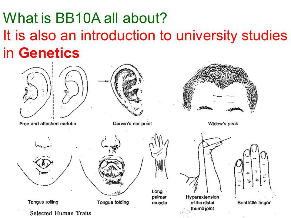 What is BB10A all about? It is also an introduction to university studies in Genetics