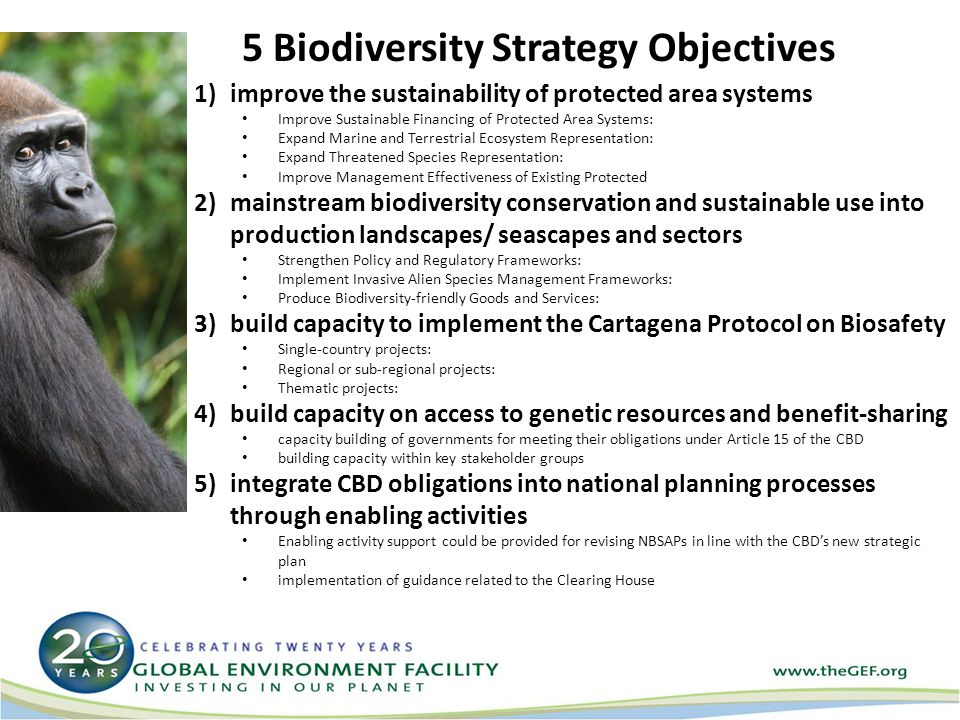 5 Biodiversity Strategy Objectives 1)improve the sustainability of protected area systems Improve Sustainable Financing of Protected Area Systems: Expand Marine and Terrestrial Ecosystem Representation: Expand Threatened Species Representation: Improve Management Effectiveness of Existing Protected 2)mainstream biodiversity conservation and sustainable use into production landscapes/ seascapes and sectors Strengthen Policy and Regulatory Frameworks: Implement Invasive Alien Species Management Frameworks: Produce Biodiversity-friendly Goods and Services: 3)build capacity to implement the Cartagena Protocol on Biosafety Single-country projects: Regional or sub-regional projects: Thematic projects: 4)build capacity on access to genetic resources and benefit-sharing capacity building of governments for meeting their obligations under Article 15 of the CBD building capacity within key stakeholder groups 5)integrate CBD obligations into national planning processes through enabling activities Enabling activity support could be provided for revising NBSAPs in line with the CBD's new strategic plan implementation of guidance related to the Clearing House