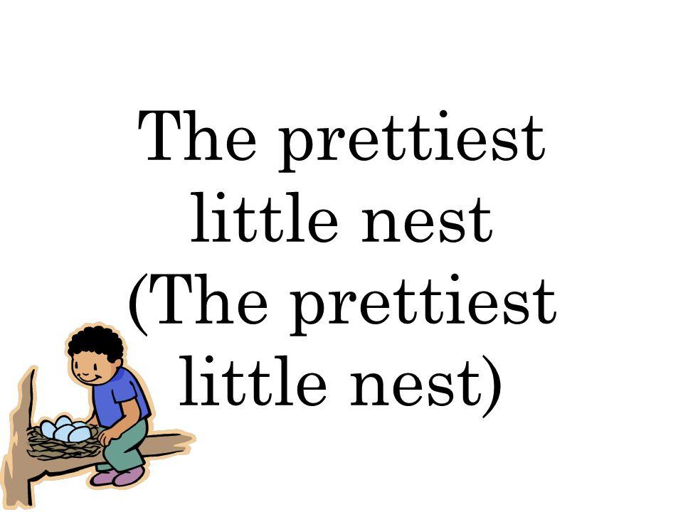 The prettiest little nest (The prettiest little nest)
