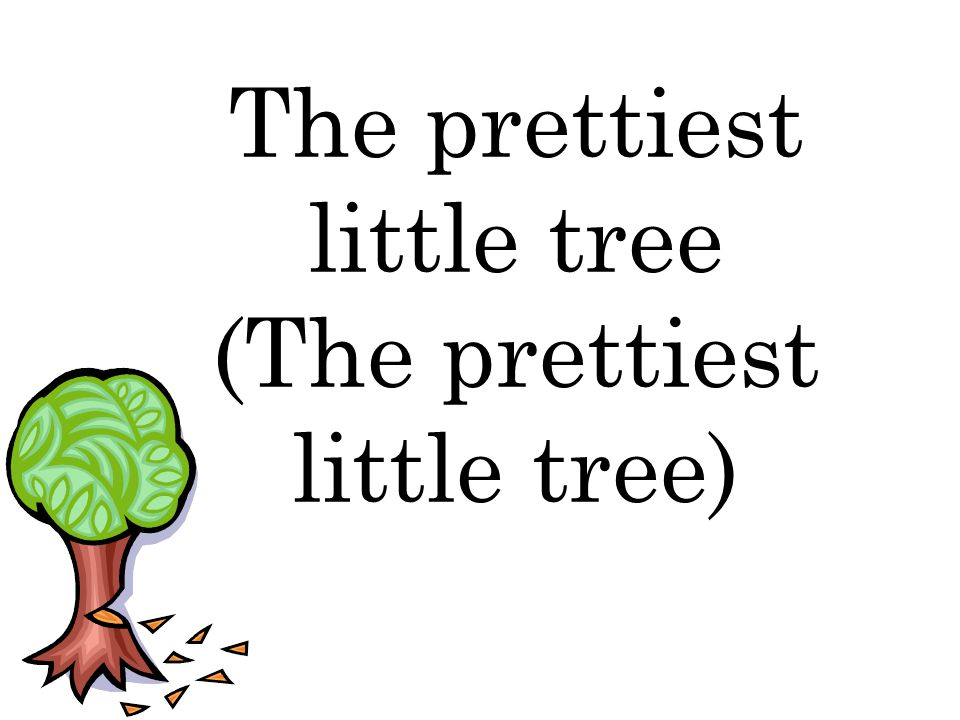 The prettiest little tree (The prettiest little tree)