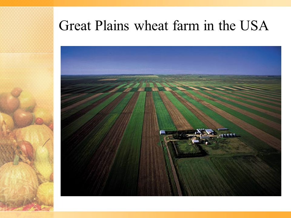 Great Plains wheat farm in the USA
