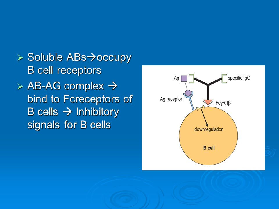  Soluble ABs  occupy B cell receptors  AB-AG complex  bind to Fcreceptors of B cells  Inhibitory signals for B cells