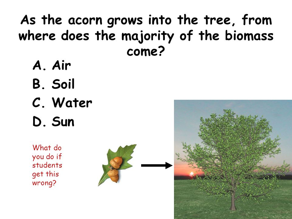 As the acorn grows into the tree, from where does the majority of the biomass come.
