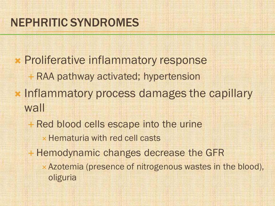 NEPHRITIC SYNDROMES  Proliferative inflammatory response  RAA pathway activated; hypertension  Inflammatory process damages the capillary wall  Red blood cells escape into the urine  Hematuria with red cell casts  Hemodynamic changes decrease the GFR  Azotemia (presence of nitrogenous wastes in the blood), oliguria
