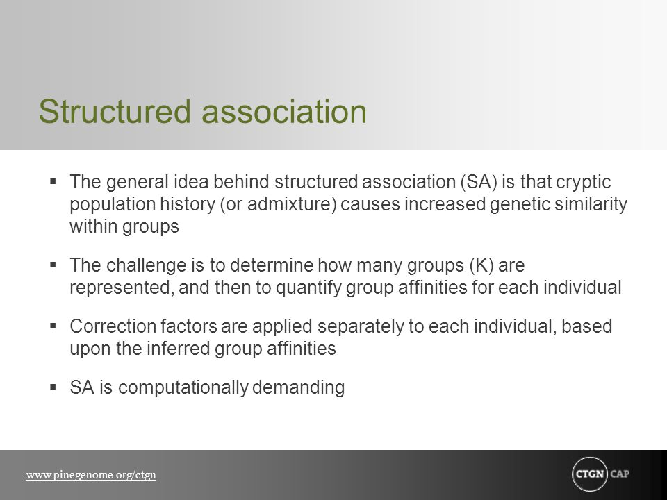 www.pinegenome.org/ctgn Structured association  The general idea behind structured association (SA) is that cryptic population history (or admixture) causes increased genetic similarity within groups  The challenge is to determine how many groups (K) are represented, and then to quantify group affinities for each individual  Correction factors are applied separately to each individual, based upon the inferred group affinities  SA is computationally demanding