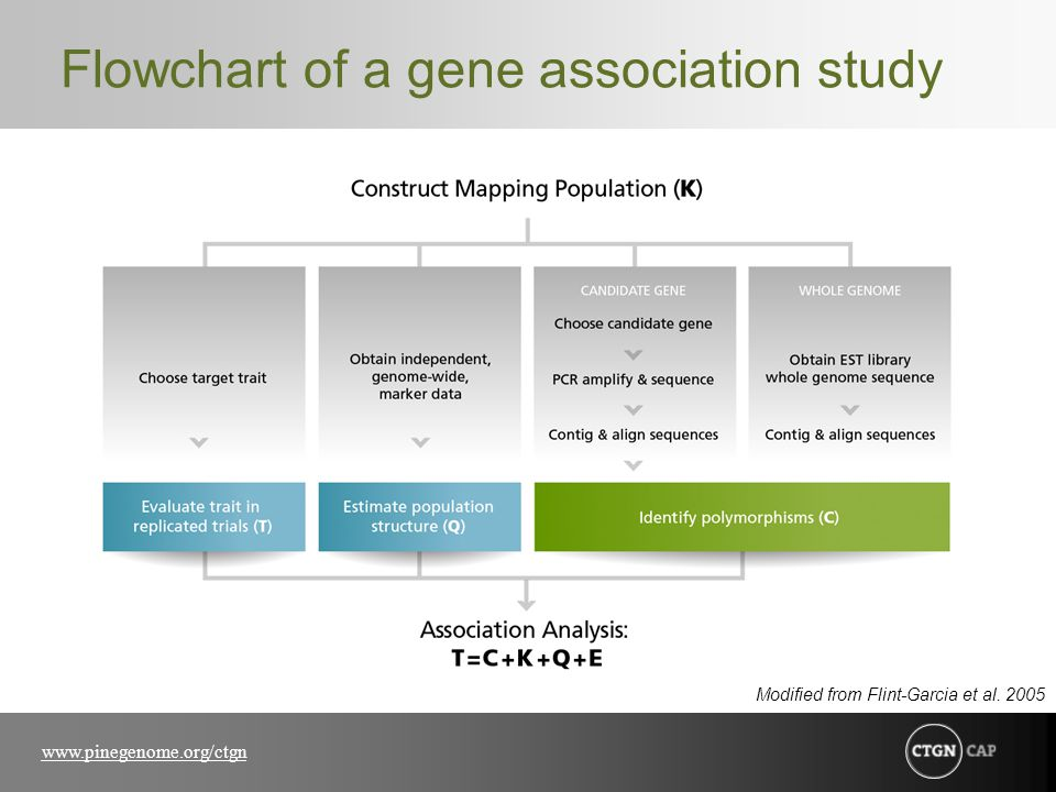 www.pinegenome.org/ctgn Flowchart of a gene association study Modified from Flint-Garcia et al.