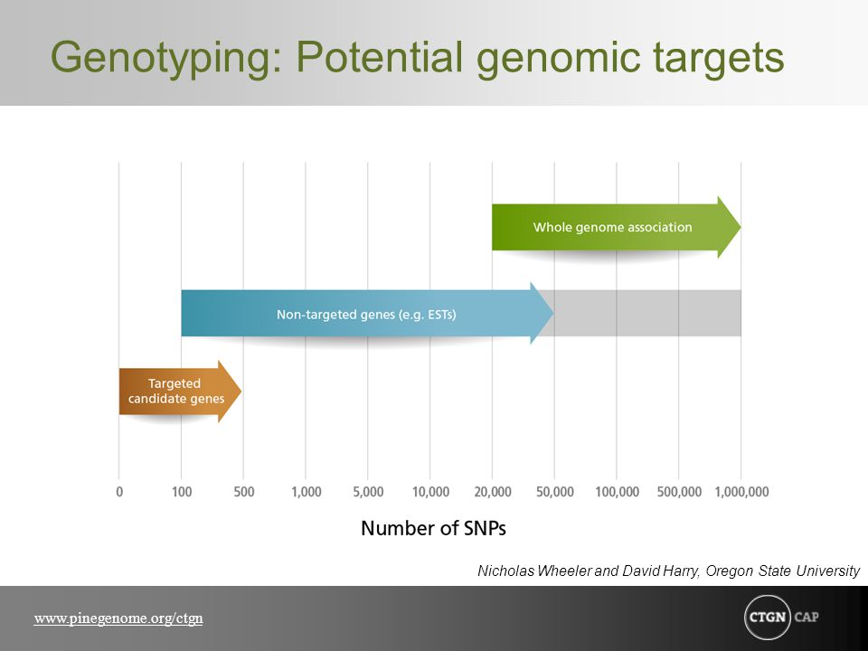 www.pinegenome.org/ctgn Genotyping: Potential genomic targets Nicholas Wheeler and David Harry, Oregon State University