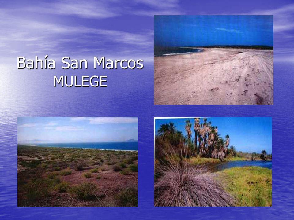 Bahía San Marcos MULEGE