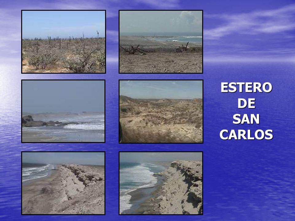 ESTERO DE SAN CARLOS
