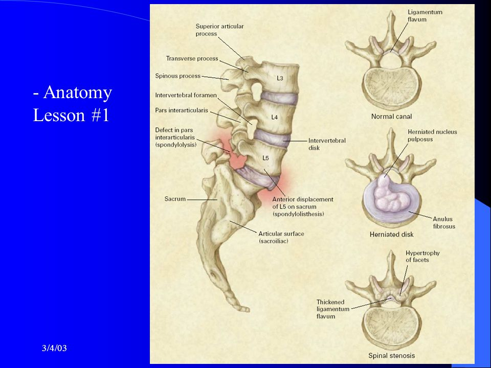 3/4/03Steven Stoltz, M.D. - Anatomy Lesson #1