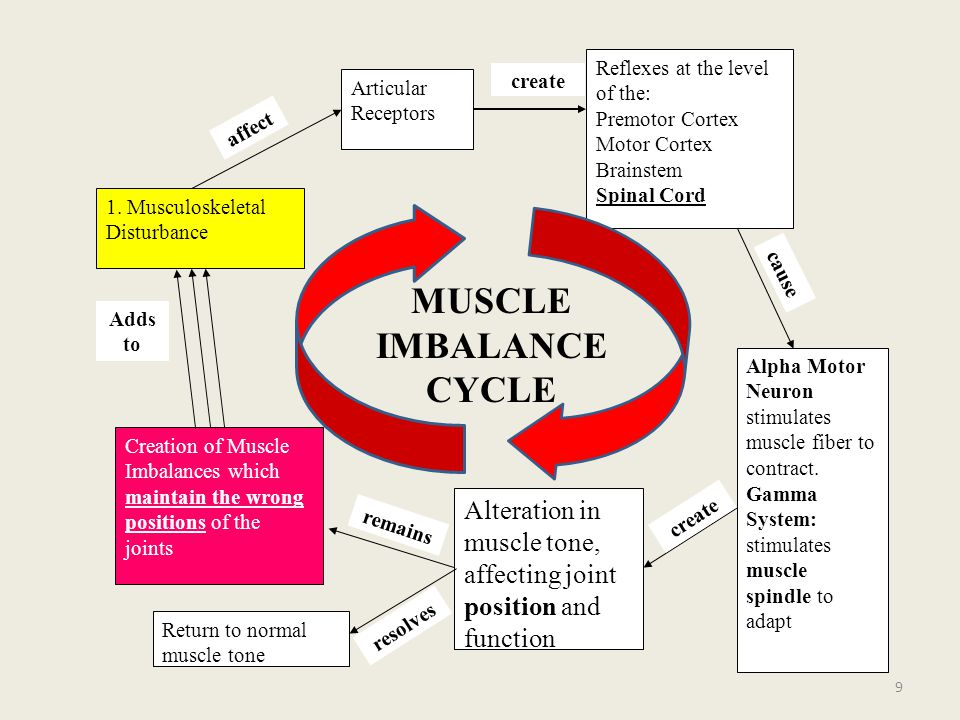 DIAGNOSIS AND TREATMENTS OF COMMON MUSCLE IMBALANCES OF THE PELVIS AND LOW BACK 40 HANDS-ON SESSION