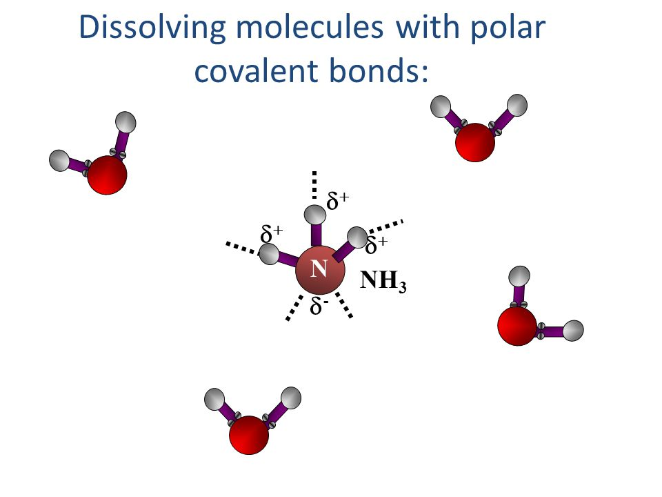 Dissolving molecules with polar covalent bonds: NH 3 N --   