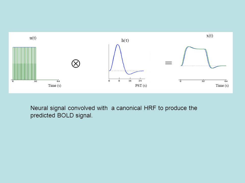 Neural signal convolved with a canonical HRF to produce the predicted BOLD signal.
