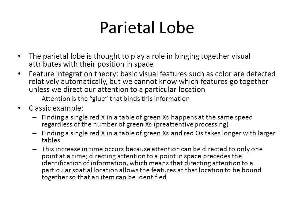 Parietal Lobe The parietal lobe is thought to play a role in binging together visual attributes with their position in space Feature integration theory: basic visual features such as color are detected relatively automatically, but we cannot know which features go together unless we direct our attention to a particular location – Attention is the glue that binds this information Classic example: – Finding a single red X in a table of green Xs happens at the same speed regardless of the number of green Xs (preattentive processing) – Finding a single red X in a table of green Xs and red Os takes longer with larger tables – This increase in time occurs because attention can be directed to only one point at a time; directing attention to a point in space precedes the identification of information, which means that directing attention to a particular spatial location allows the features at that location to be bound together so that an item can be identified