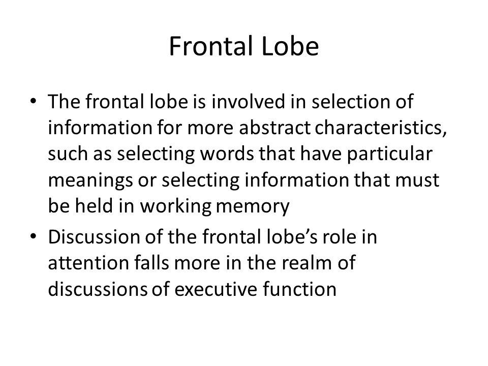 Frontal Lobe The frontal lobe is involved in selection of information for more abstract characteristics, such as selecting words that have particular meanings or selecting information that must be held in working memory Discussion of the frontal lobe's role in attention falls more in the realm of discussions of executive function