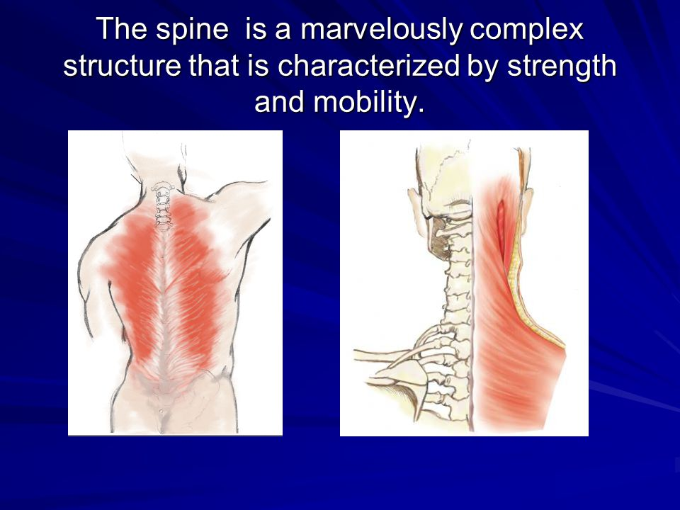 The spine is a marvelously complex structure that is characterized by strength and mobility.