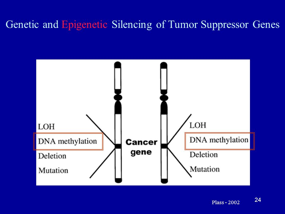 24 Genetic and Epigenetic Silencing of Tumor Suppressor Genes Plass - 2002