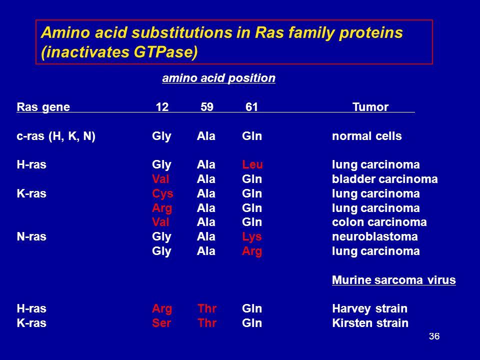 36 amino acid position Ras gene 12 59 61 Tumor c-ras (H, K, N)GlyAlaGlnnormal cells H-rasGlyAlaLeulung carcinoma ValAlaGlnbladder carcinoma K-rasCysAl