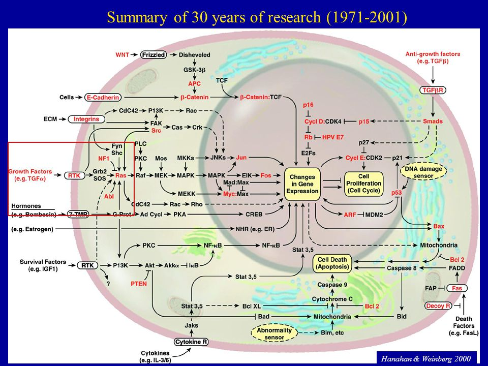 54 Hanahan & Weinberg 2000 Summary of 30 years of research (1971-2001)