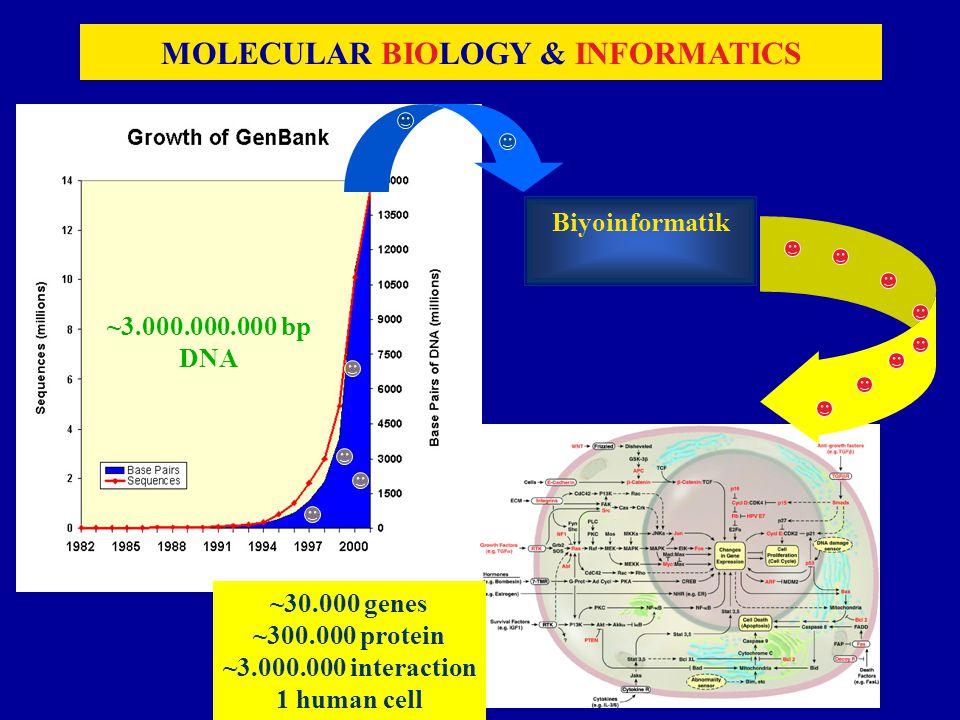 60 MOLECULAR BIOLOGY & INFORMATICS Biyoinformatik ~30.000 genes ~300.000 protein ~3.000.000 interaction 1 human cell ~3.000.000.000 bp DNA