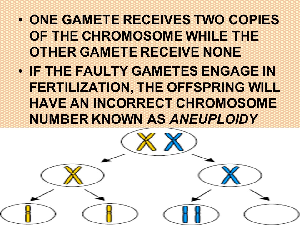 ONE GAMETE RECEIVES TWO COPIES OF THE CHROMOSOME WHILE THE OTHER GAMETE RECEIVE NONE IF THE FAULTY GAMETES ENGAGE IN FERTILIZATION, THE OFFSPRING WILL