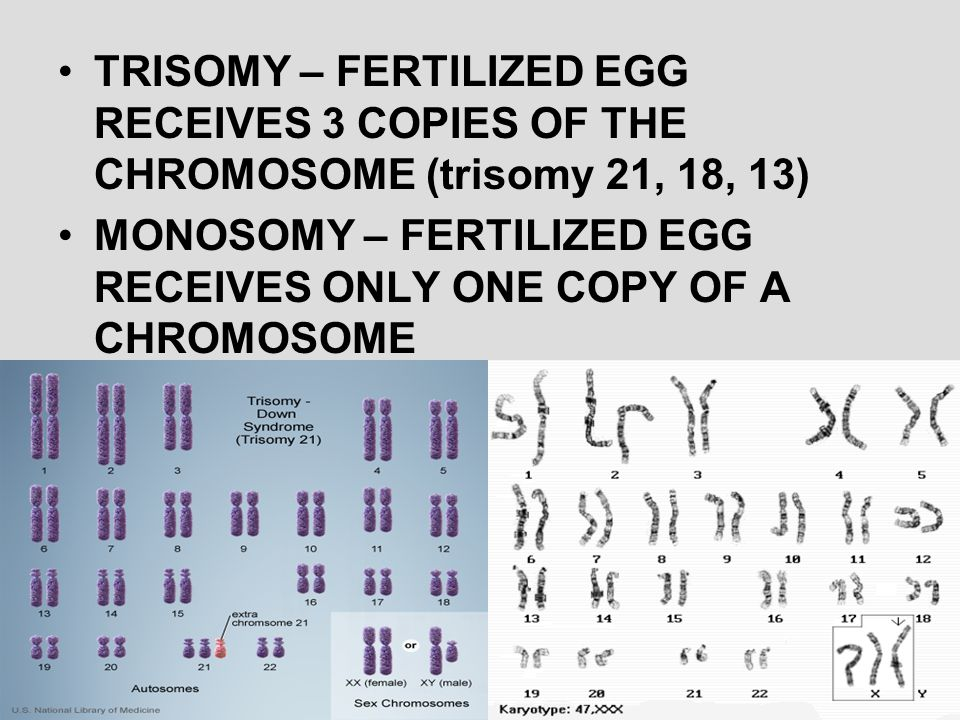 TRISOMY – FERTILIZED EGG RECEIVES 3 COPIES OF THE CHROMOSOME (trisomy 21, 18, 13) MONOSOMY – FERTILIZED EGG RECEIVES ONLY ONE COPY OF A CHROMOSOME