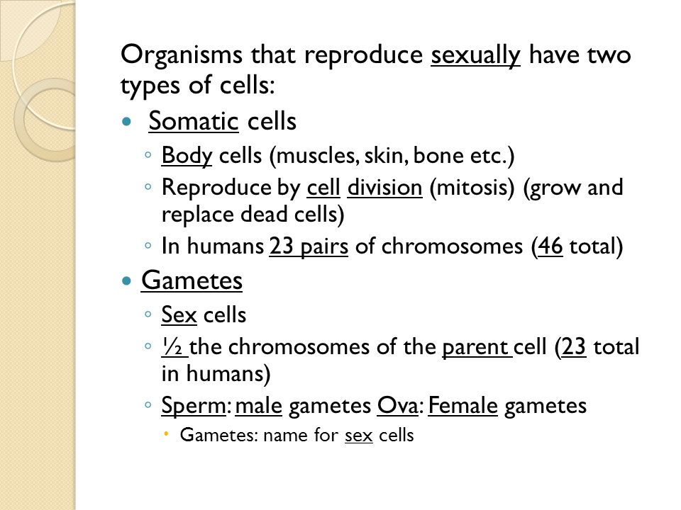 Organisms that reproduce sexually have two types of cells: Somatic cells ◦ Body cells (muscles, skin, bone etc.) ◦ Reproduce by cell division (mitosis) (grow and replace dead cells) ◦ In humans 23 pairs of chromosomes (46 total) Gametes ◦ Sex cells ◦ ½ the chromosomes of the parent cell (23 total in humans) ◦ Sperm: male gametes Ova: Female gametes  Gametes: name for sex cells