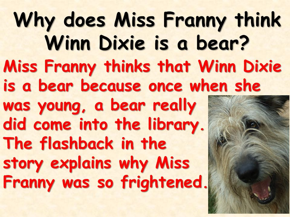 Why does Miss Franny think Winn Dixie is a bear? Miss Franny thinks that Winn Dixie is a bear because once when she was young, a bear really did come