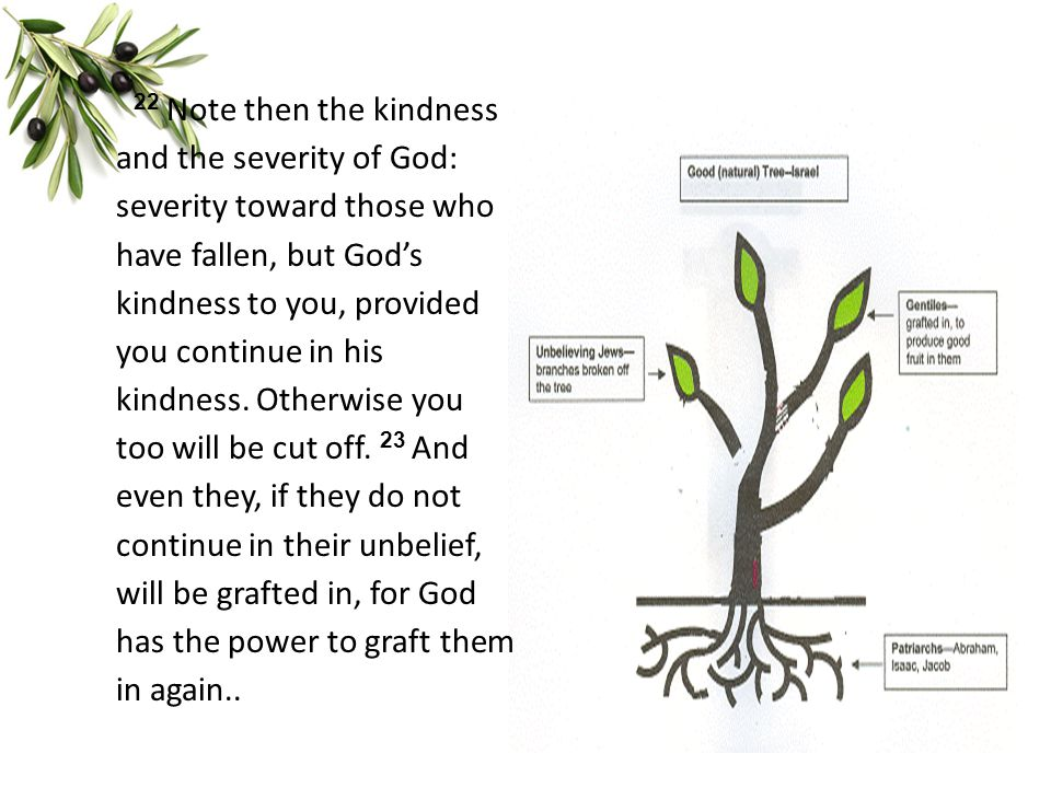 22 Note then the kindness and the severity of God: severity toward those who have fallen, but God's kindness to you, provided you continue in his kind