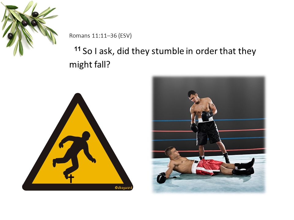 Romans 11:11–36 (ESV) 11 So I ask, did they stumble in order that they might fall?