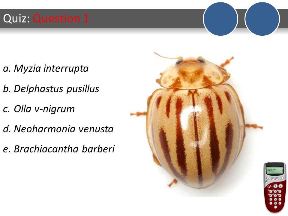 Quiz: Question 1 a.Myzia interrupta b.Delphastus pusillus c.Olla v-nigrum d.Neoharmonia venusta e.Brachiacantha barberi