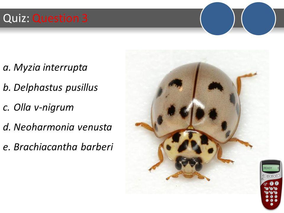 Quiz: Question 4 a.Myzia interrupta b.Delphastus pusillus c.Olla v-nigrum d.Neoharmonia venusta e.Brachiacantha barberi