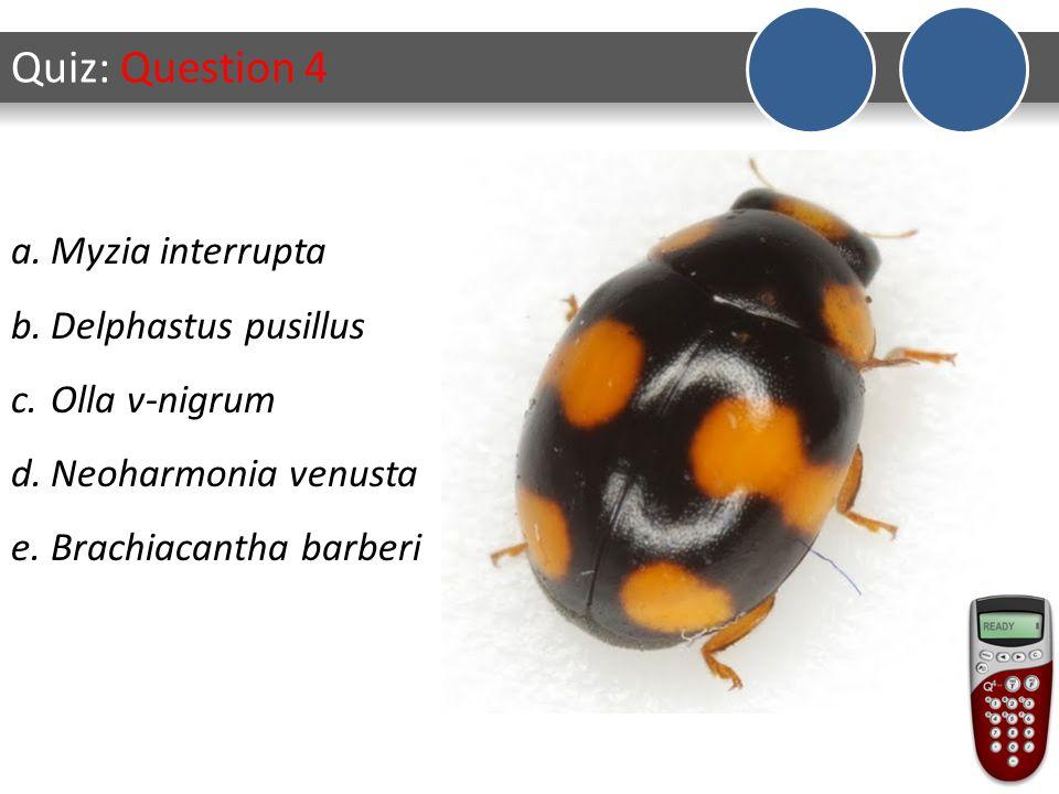 Quiz: Question 5 a.Myzia interrupta b.Delphastus pusillus c.Olla v-nigrum d.Neoharmonia venusta e.Brachiacantha barberi