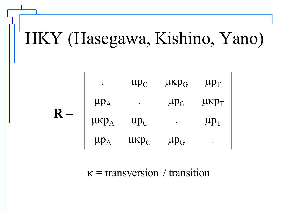 Kimura 2-Parameter.bab b.ba ab.b bab. R = a/b = transition/transversion bias A C G T