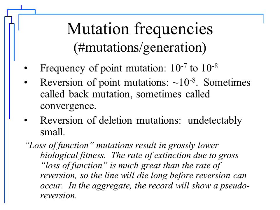 Exceptions to Mendel's Laws The theory: a chromosomal basis of inheritance Some so-called exceptions: linkage and recombination gene conversion transposition and mobile genetic elements A plethora of other mutations: point mutations, reversions, deletions, frameshifts, duplications, inversions Exceptions do not result in rejection of Mendelian genetics but a better understanding of the mechanisms underlying Mendelian inheritance.