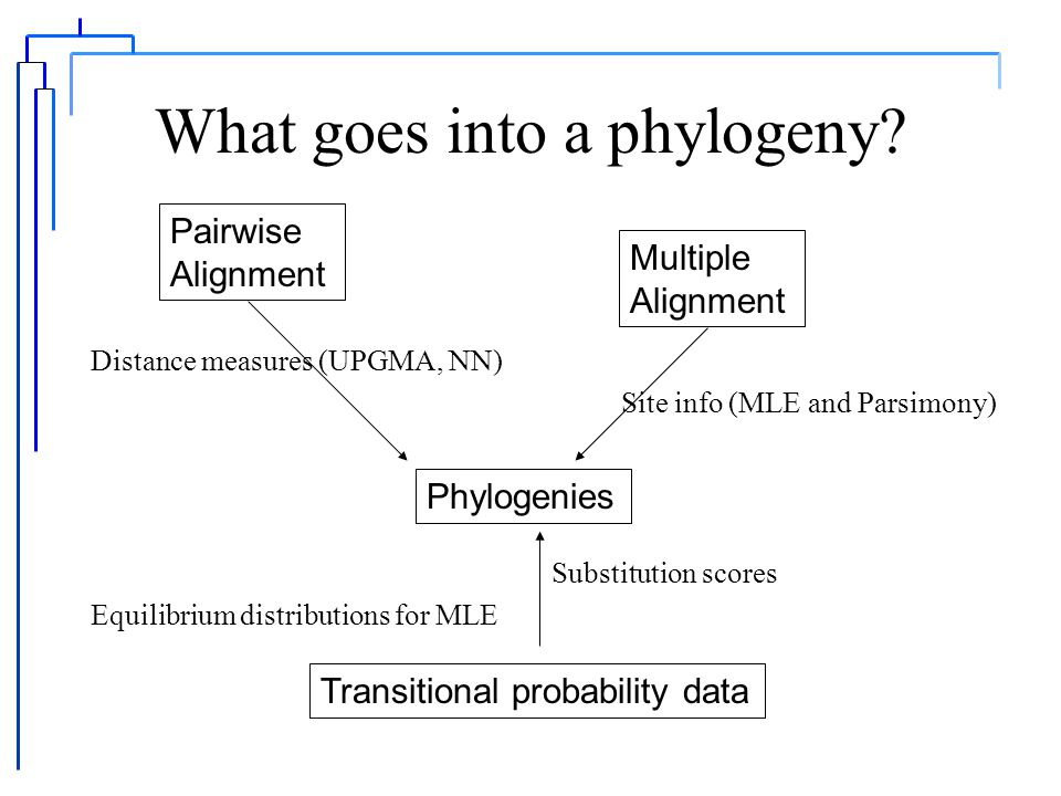 Phylogenies provide measures of similarity and can lay a foundation for scoring alignments.