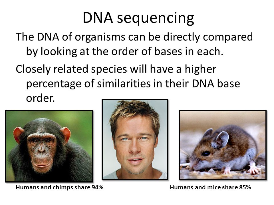 The DNA of organisms can be directly compared by looking at the order of bases in each. Closely related species will have a higher percentage of simil